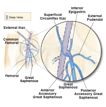 Venous-illustration